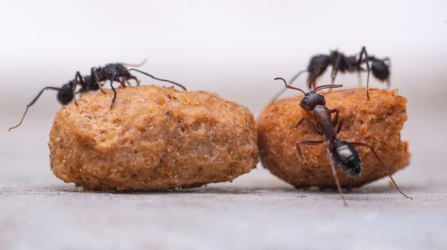 produits anti-fourmis