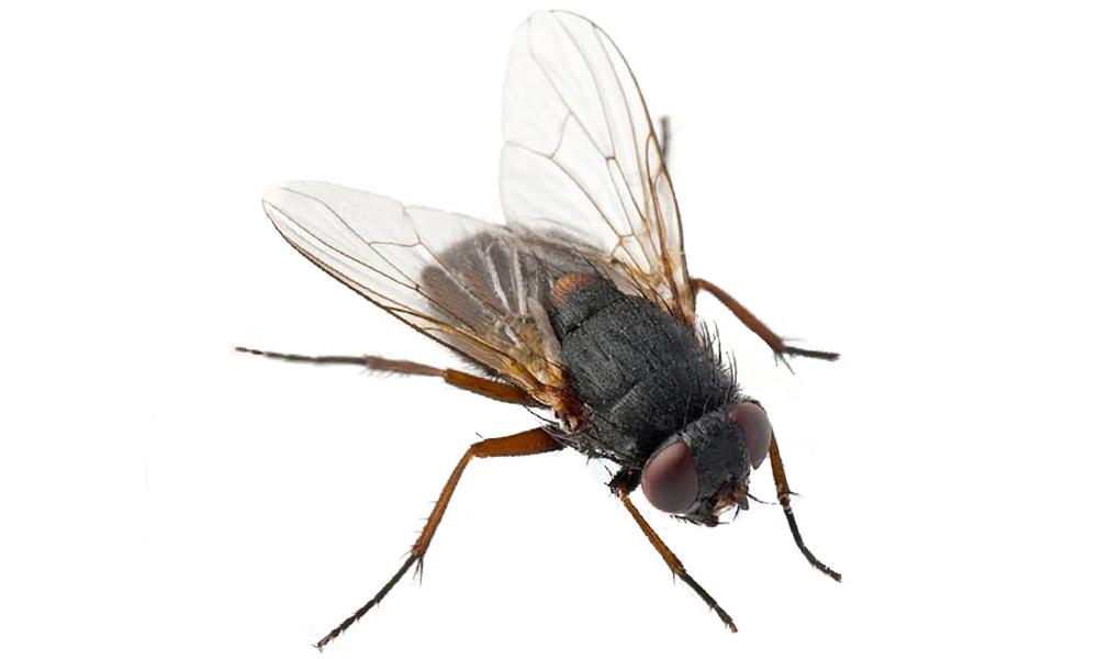 produits anti-mouches